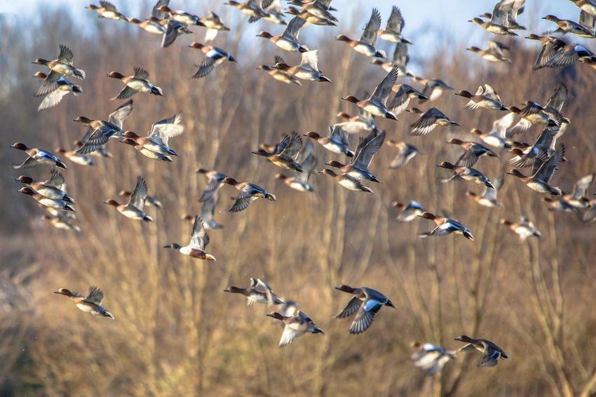 Птицы вполете никогда несталкиваются друг сдругом— Ученые