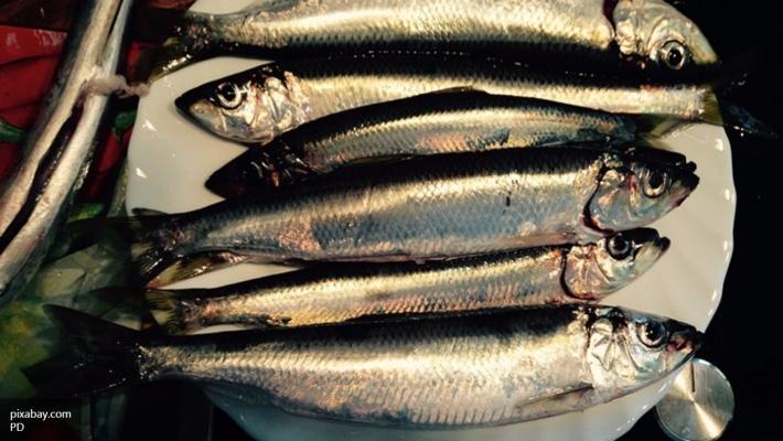 Под Красноярском изъяли около 2,5 тонн рыбы ичерной икры