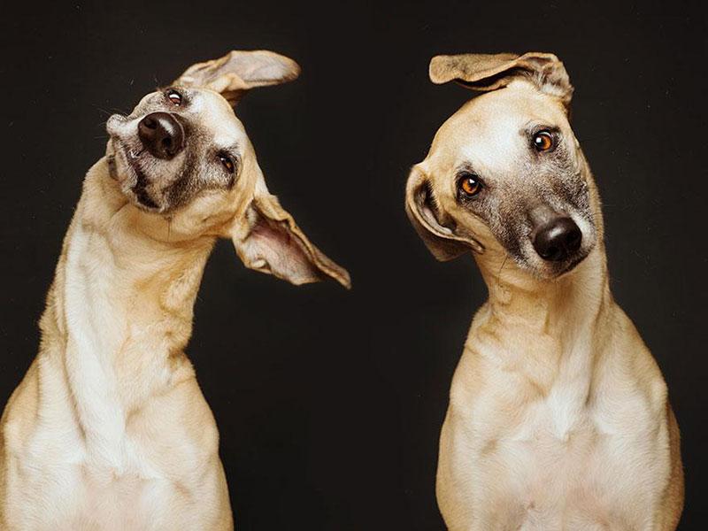 Absurdly Expressive Dog Portraits by Elke Vogelsang