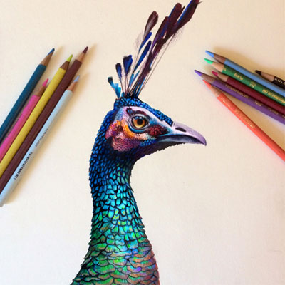 Lindas ilustracoes por Morgan Davidson (15 pics)