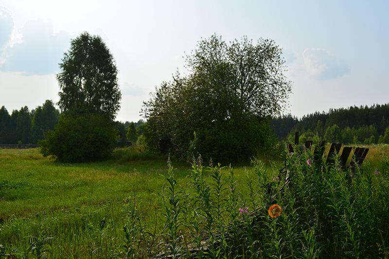 моя летняя деревня 2.jpg