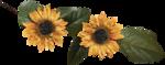pbp_DBDesigns_OM_FlowersWLeaves.png