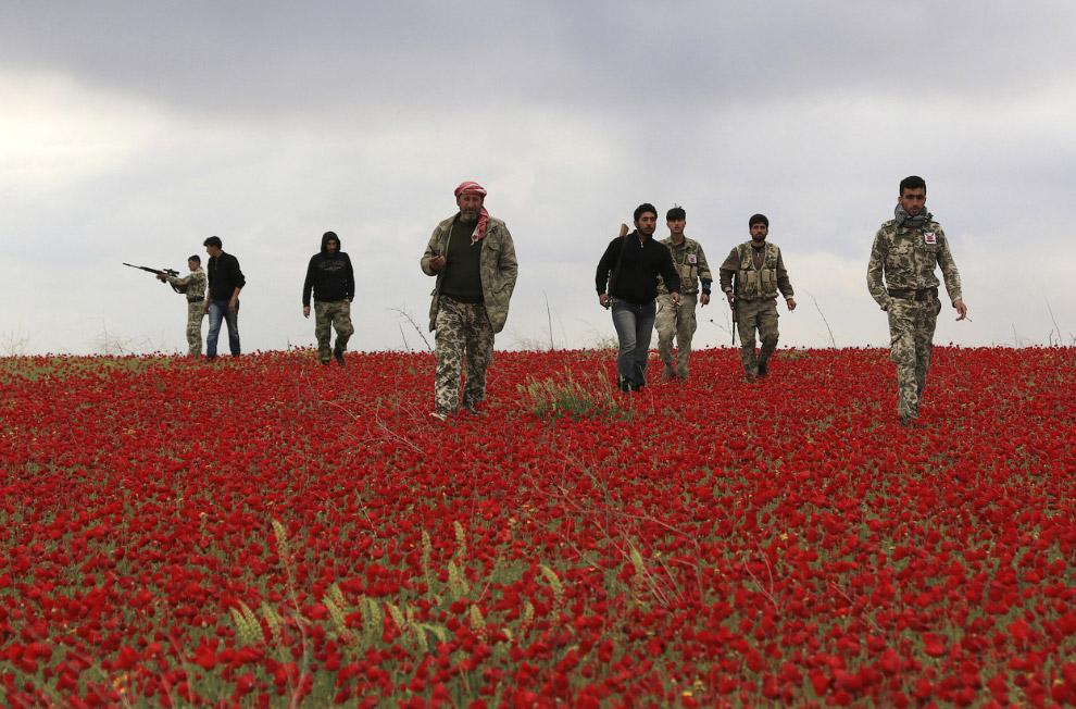Просто цветок крупным планом, Германия, 2 апреля 2014. (Фото Patrick Pleul   AFP   Getty Images