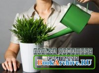 Польза домашних растений
