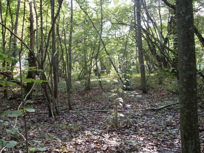 11 октября 2008, под Горячим Ключом, в лесу (19) .JPG