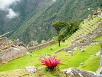 Цветы Мачу-Пикчу