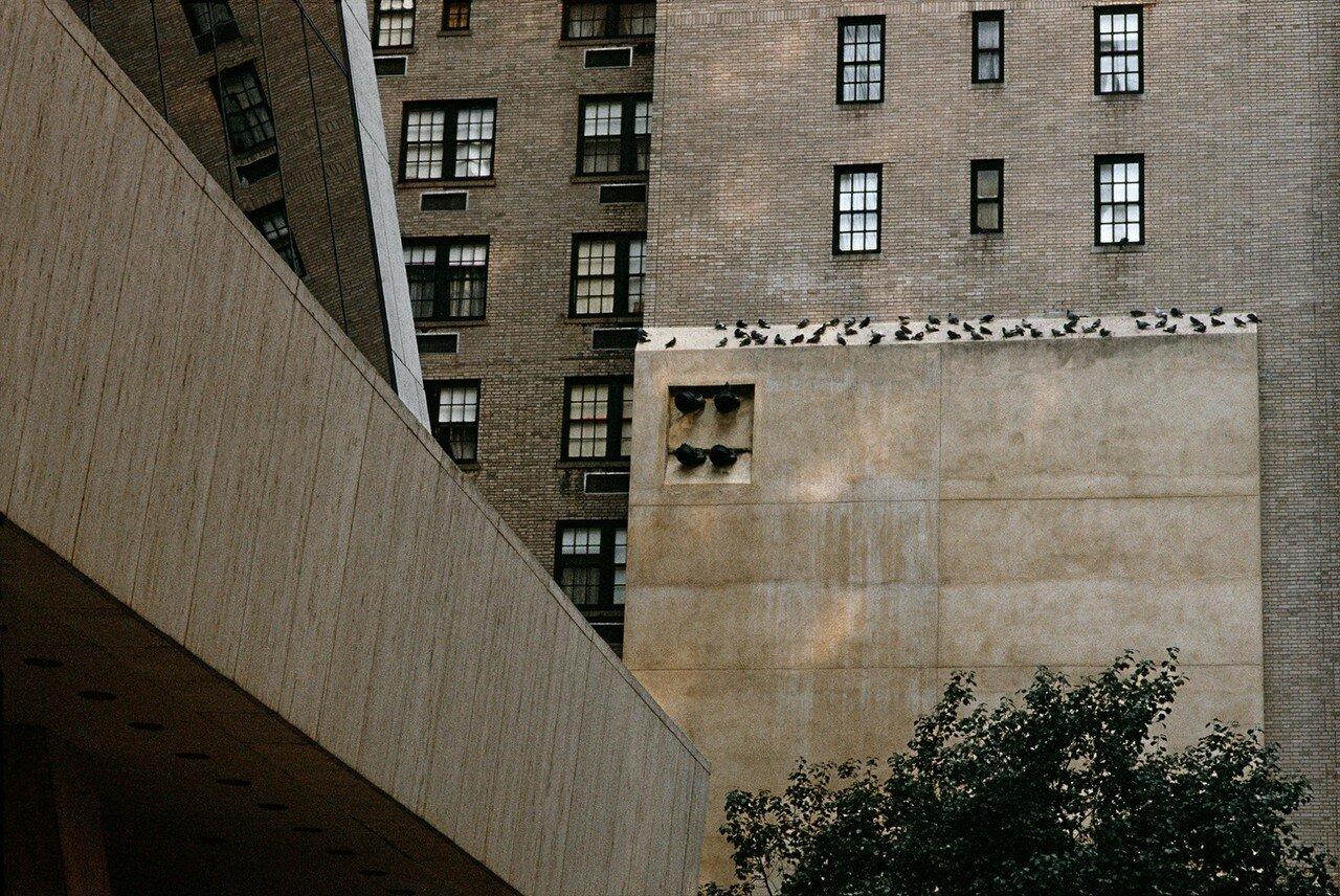1983. Стена и голуби
