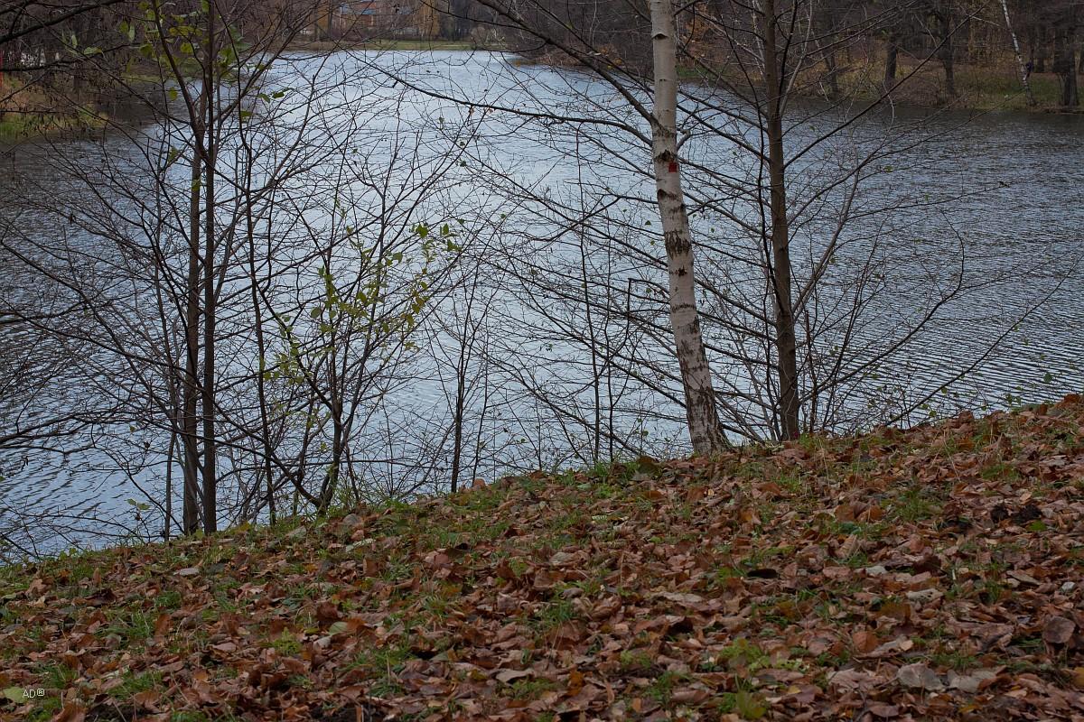 Верхний Кузьминский (Мельничный) пруд