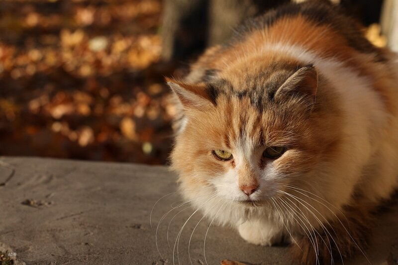 Осенняя кошка