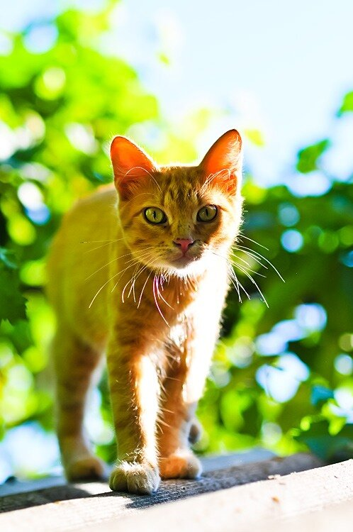 Летний кот