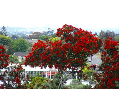 Цветущие деревья - 3
