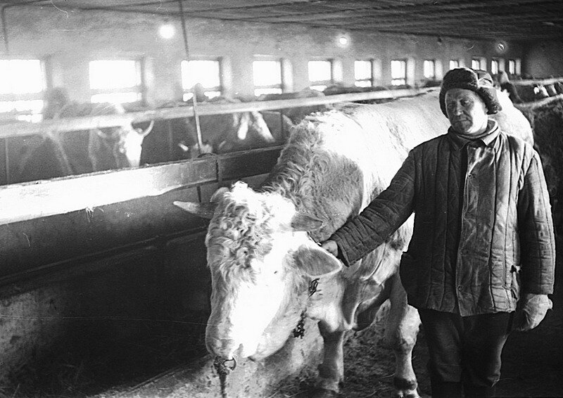 На ферме зимой
