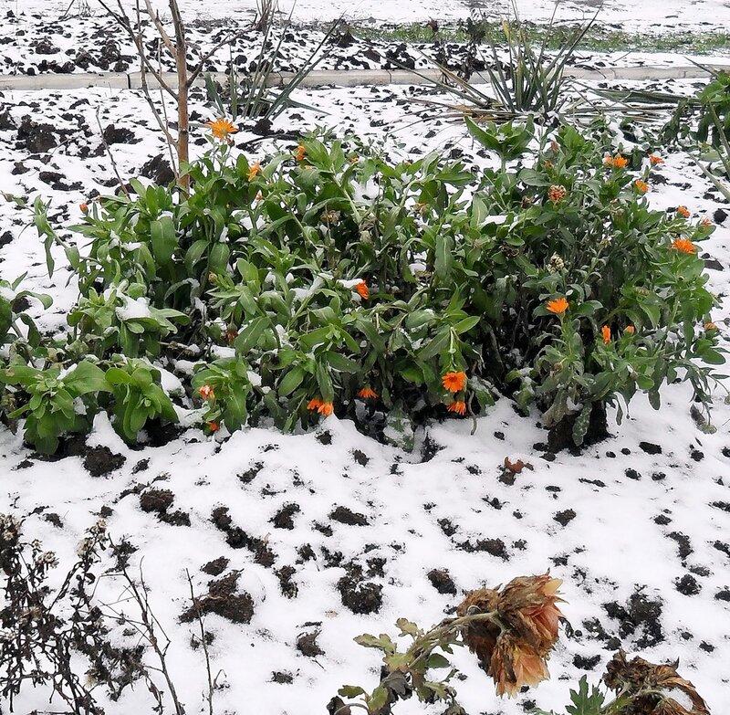 Лёгкие снежные покровы