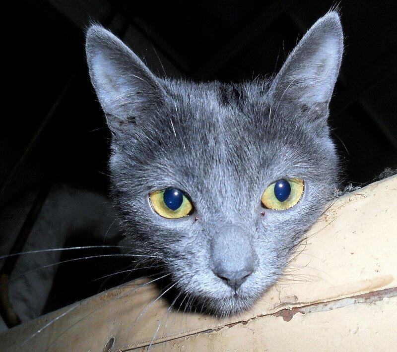 Из жизни кошкиных детей... SAM_6428.jpg