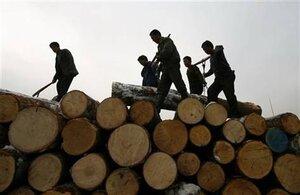 Бригада «черных» лесорубов задержана в Хабаровском крае