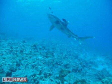 Да, акул видели и даже некоторых сняли.  А владелец нашего принимающего...