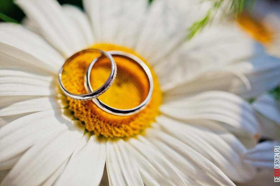 Открытка с днем свадьбы с ромашками