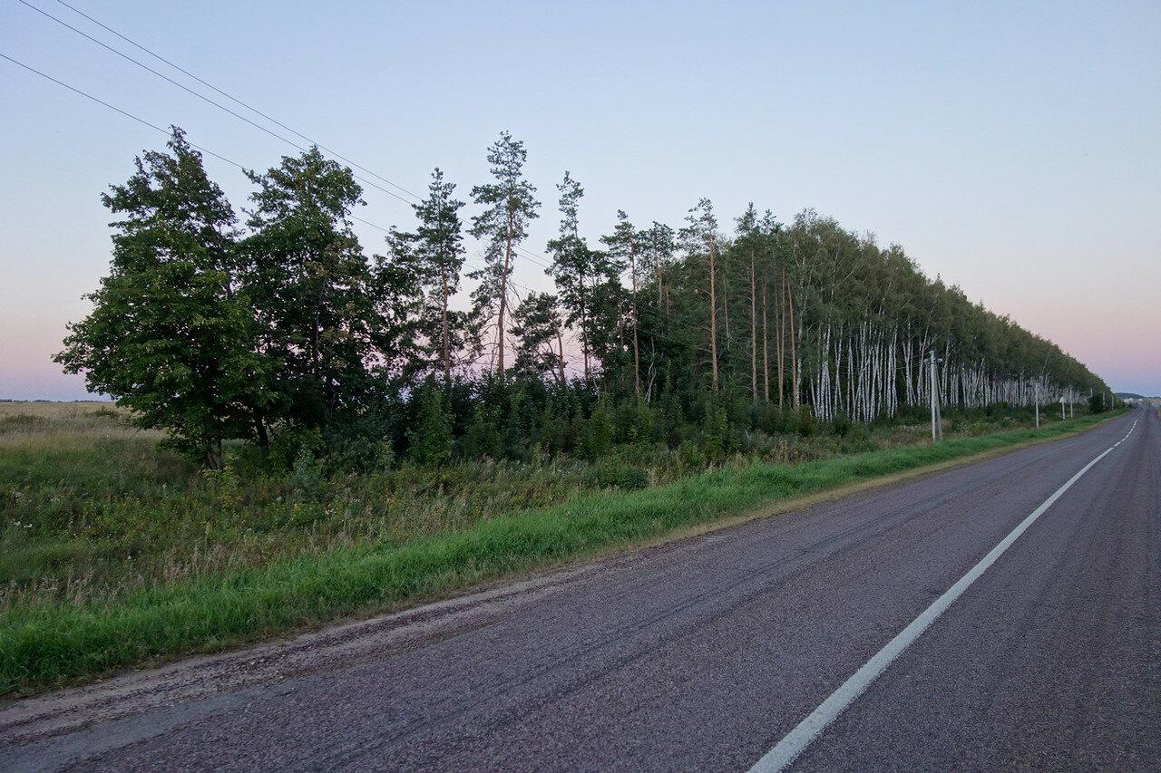 сосны и березы вдоль дороги
