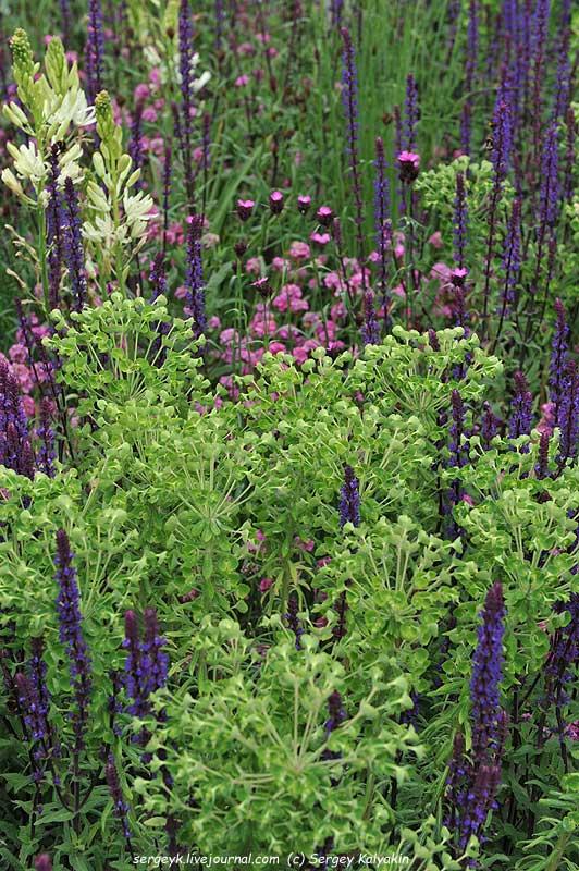The RHS Greening Grey Britain Garden (55).jpg