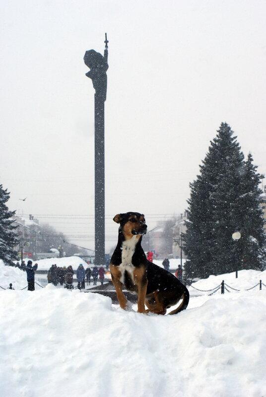 #собаченька в парке