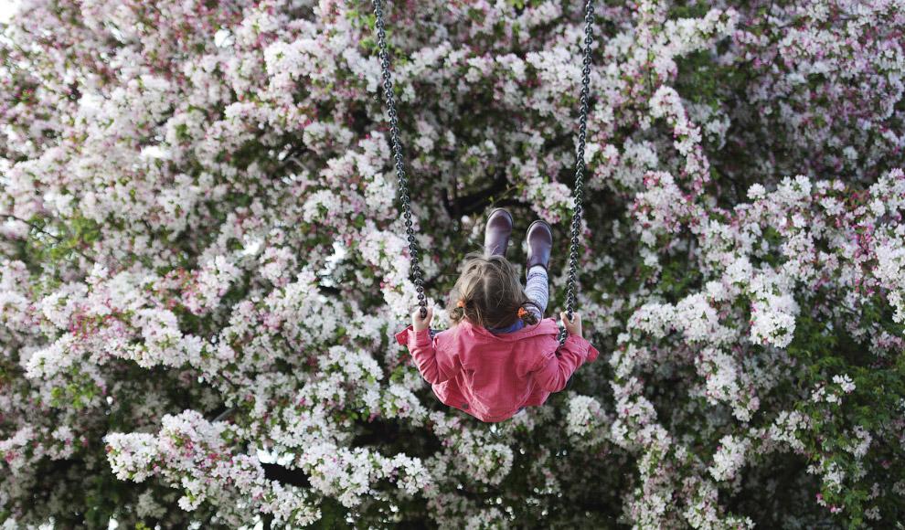 Пчела собирает пыльцу в горчичном поле, Чехия, 12 апреля 2014. (Фото Reuters | David W Cerny):