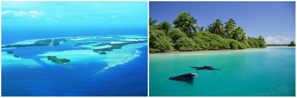 wikimedia / werc / coastalcare Находится вприэкваториальной зоне Тихого океана, кюгу отГавайски