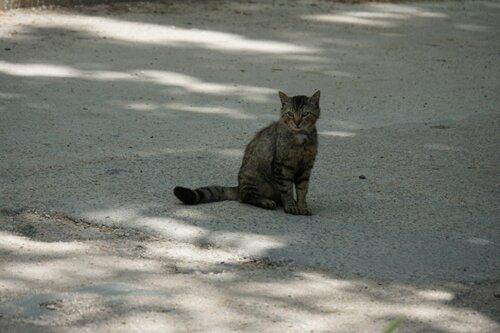 Коты и кошки города Инкермана