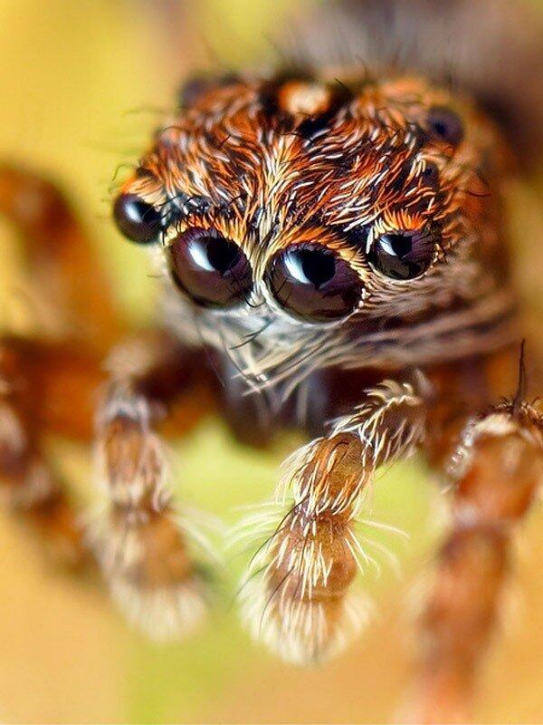 Прыгающие пауки: 3