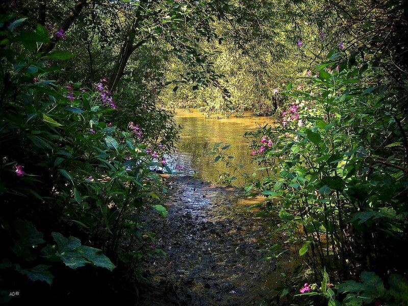 Ботанический сад 2008-08-16