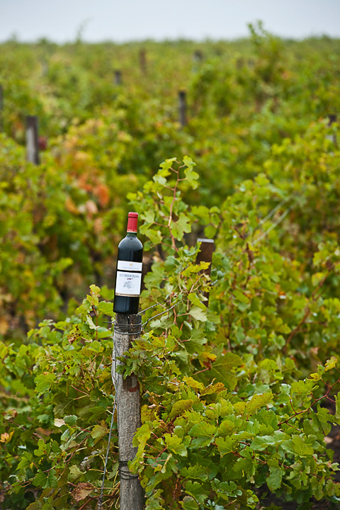 Реклама вина. фотосъёмка бутылок в винограднике.
