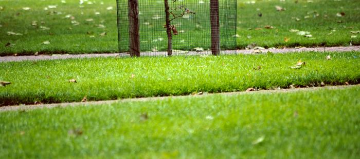 дорожки в парке с листьями