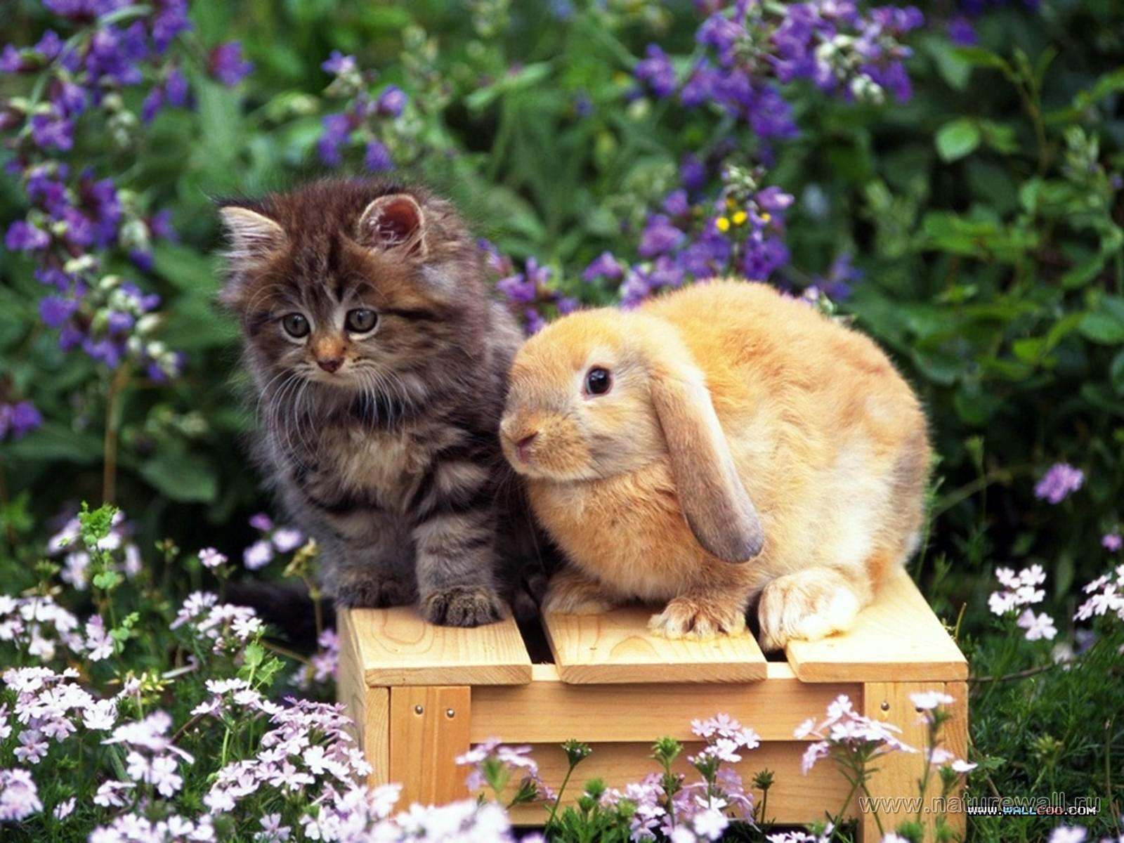 Вот. b Mastino Spagnolo, /b Хочу увидеть кошку, собаку и кролика.  Цитата.
