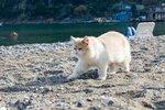 16 Морской кот