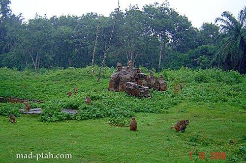 обезьяны, сафари парк, хайкоу, хайнань, китай