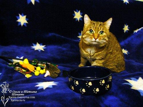 клёвый котик Пухич