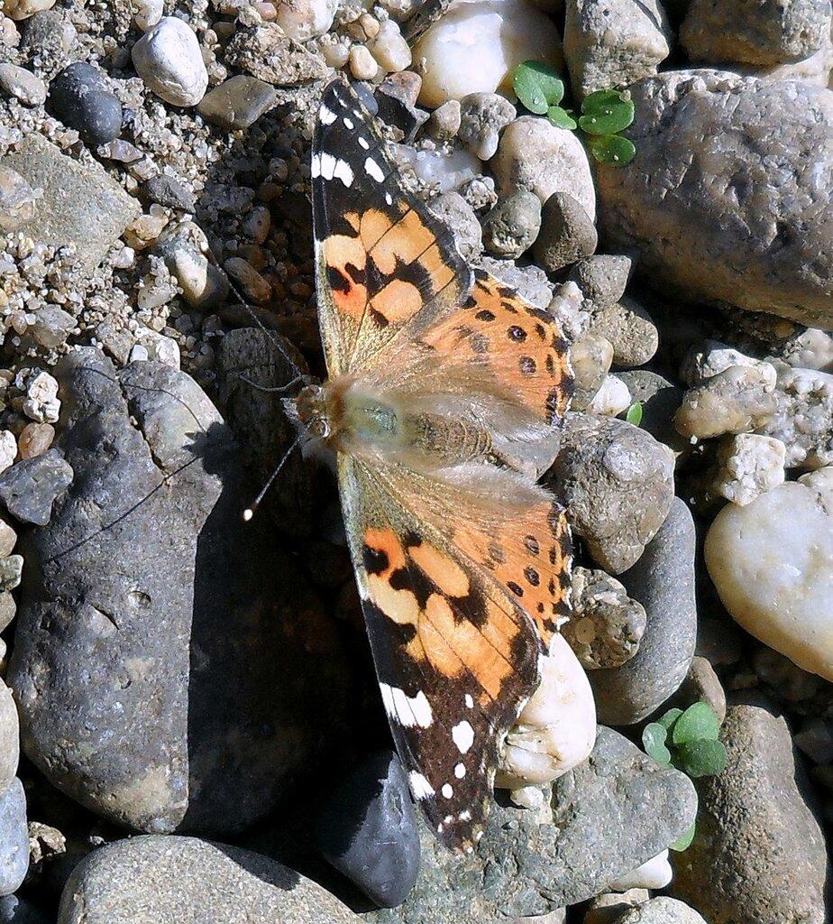 Встреча с бабочкой
