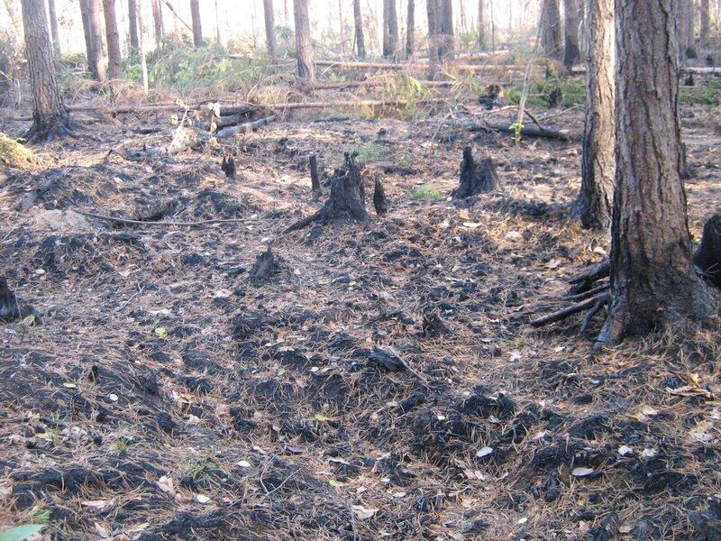лес после пожара -5