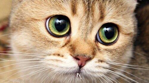 """Схема вышивки  """"Грустный кот """".  Оригинал.  Схемы автора  """"elena-1991x """".  Видов стежков несколько: традиционный метод..."""