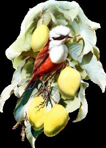 птички винтажные