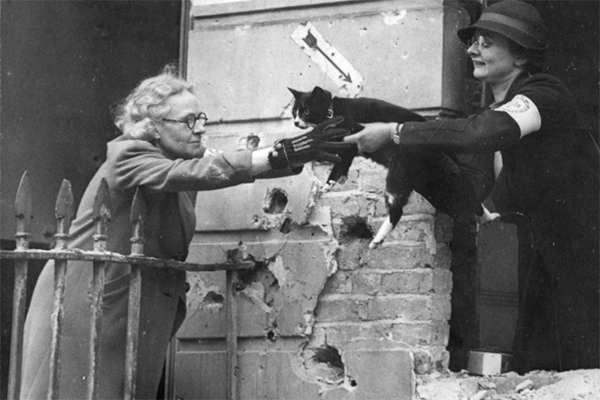 Зачем британцы жестоко истребляли домашних кошек и собак