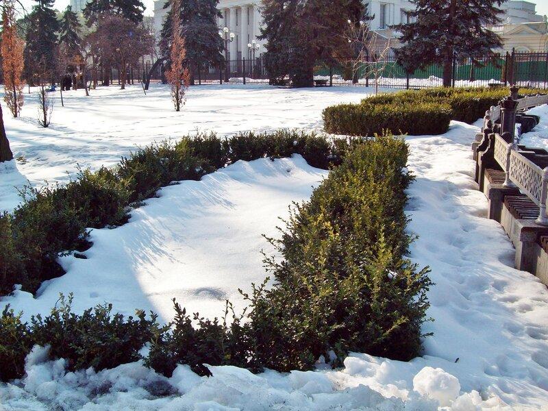 Декоративный кустарник Мариинского парка