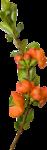 """Скрап набор """"цветочная улыбка"""" 0_74015_48f16de_S"""