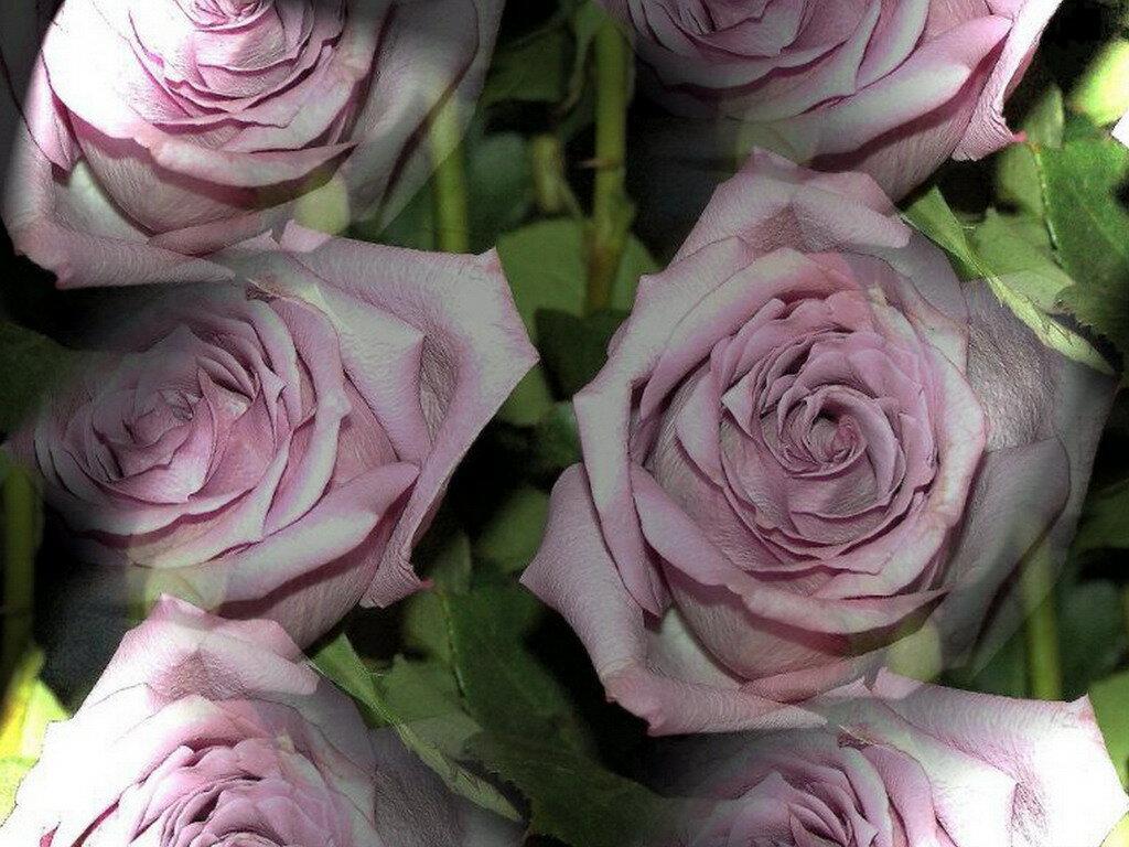 Розовая целка фото 18 летних 28 фотография