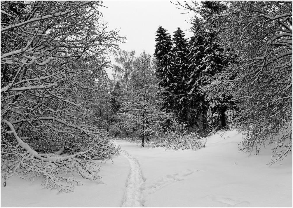 Зимними тропами
