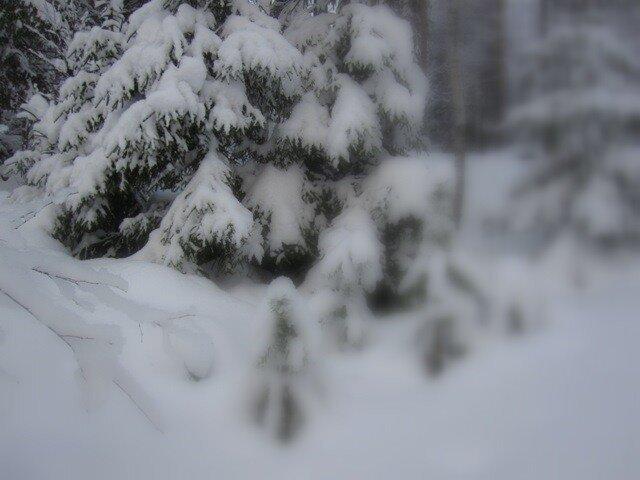 winter dream Varkaus Finland forest