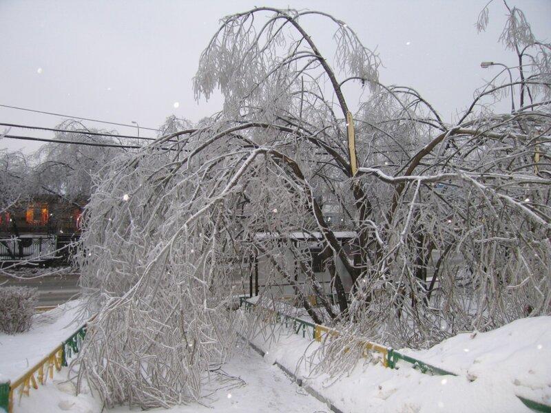 Часть деревьев просто поломало