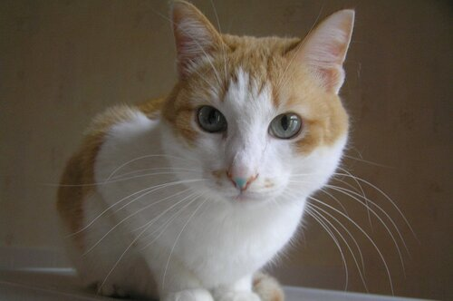 Кот-мороз, зелёный нос