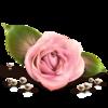 КлипАрты Цветы
