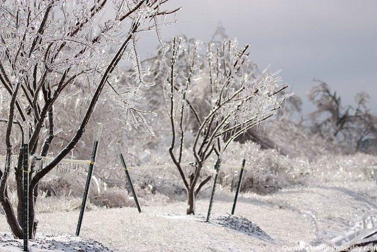 фото ледяной дождь