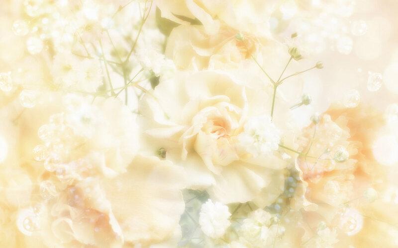 【制作网页素材篇】唯美的花朵背景素材3 - 浪漫人生 - .